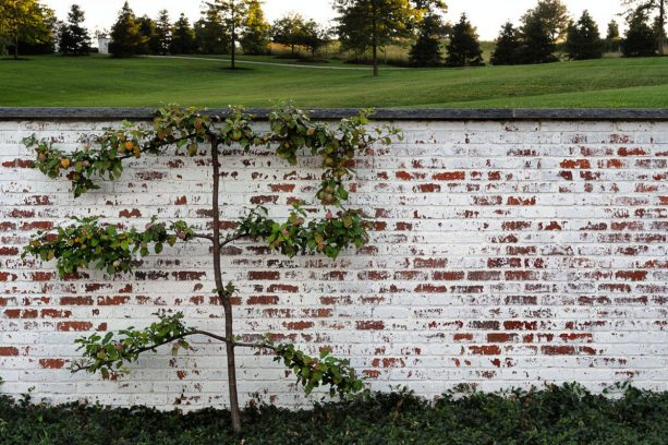 german smear brick wall with textured and distressed look
