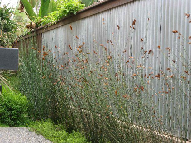 contemporary galvanized corrugated aluminum fence with border plants