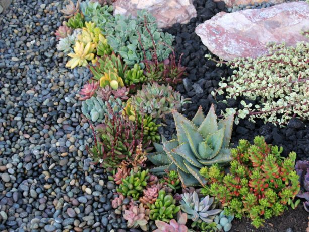 a succulent landscape design with black lava rocks and Mexican beach pebbles as the floor